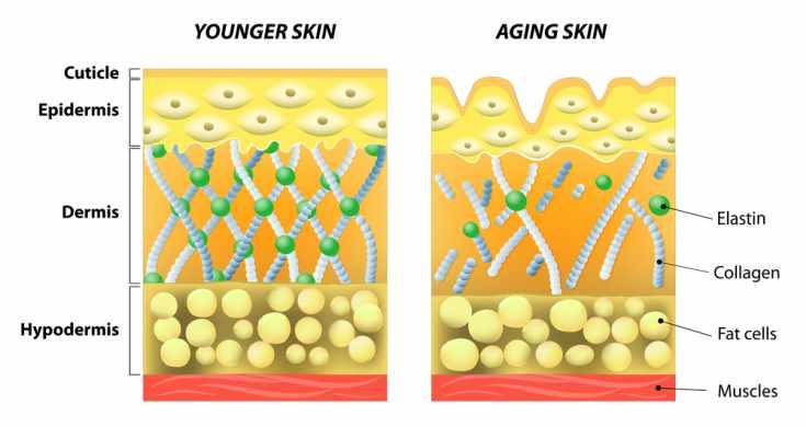 aging skin - younger skin - old skin
